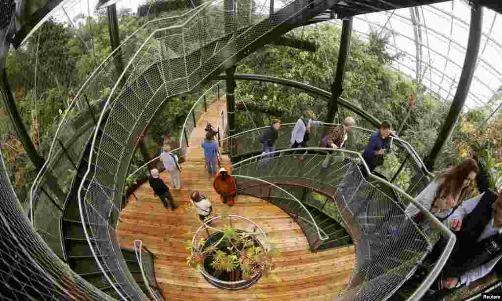 Visitors climb up stairs on the newly opened treetop path in the Masoala Rainforest hall at the zoo in Zurich, Switzerland.
