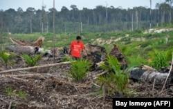Sebuah survei lapangan Greenpeace di Kabupaten Kapuas, Kalimantan Tengah. (Foto: AFP/Bay Ismoyo)