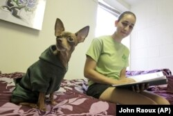 Emily Rosenfeld, a first-year student at Stetson University in DeLand, Florida, spends time with her Chihuahua, Archie, in her dorm room.