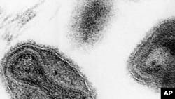 Le virus de la variole (Photo AP)