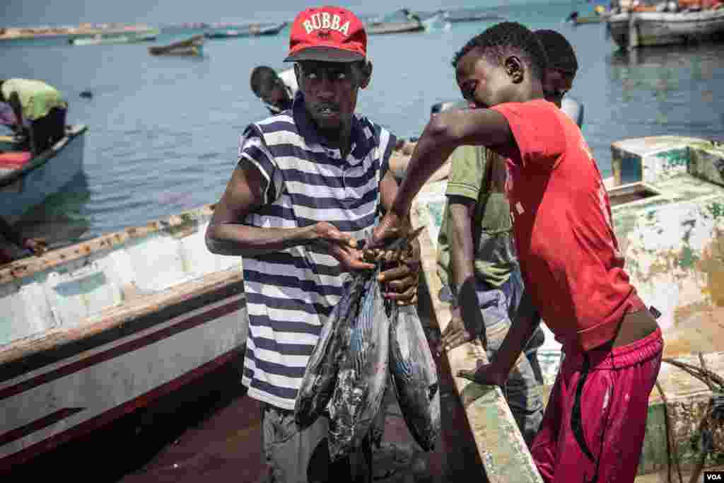 Men offload fresh tuna at the Bossaso fishing beach in northern Somalia in late March 2018. (J. Patinkin/VOA)