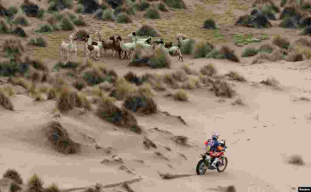 កីឡាករ Sam Sunderland របស់អង់គ្លេសជិះម៉ូតូម៉ាក KTM របស់គាត់នៅវគ្គទី៧នៃការប្រណាំងម៉ូតូ Dakar ប្រចាំឆ្នាំ២០១៧ រវាងក្រុង La Paz និងក្រុង Uyuni ប្រទេសបូលីវី កាលពីថ្ងៃទី៩ ខែមករា ឆ្នាំ២០១៧។