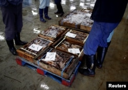 Local squid merchants inspect squid before an auction at Hakodate wholesale market in Hakodate, Hokkaido, Japan, July 20, 2018.