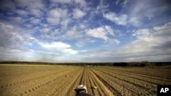 미국 조지아 주의 광활한 양파 농장
