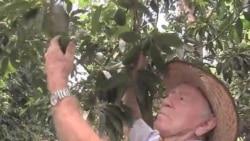 Капля за каплей - к эффективному земледелию