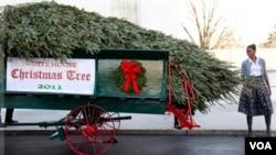Ibu negara Michelle Obama sedang memeriksa pohon Natal yang diperuntukkan bagi Gedung Putih (25/11).