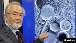 일본 도쿄 공업대의 오스미 요시노리 명예교수가 올해 노벨생리의학상 수상자로 선정됐다고, 스웨덴 노벨위원회가 3일 발표했다.