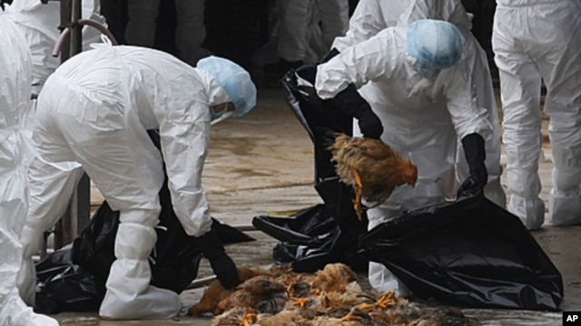 Health workers slaughter chickens at a wholesale poultry market in Hong Kong, December 21, 2011.