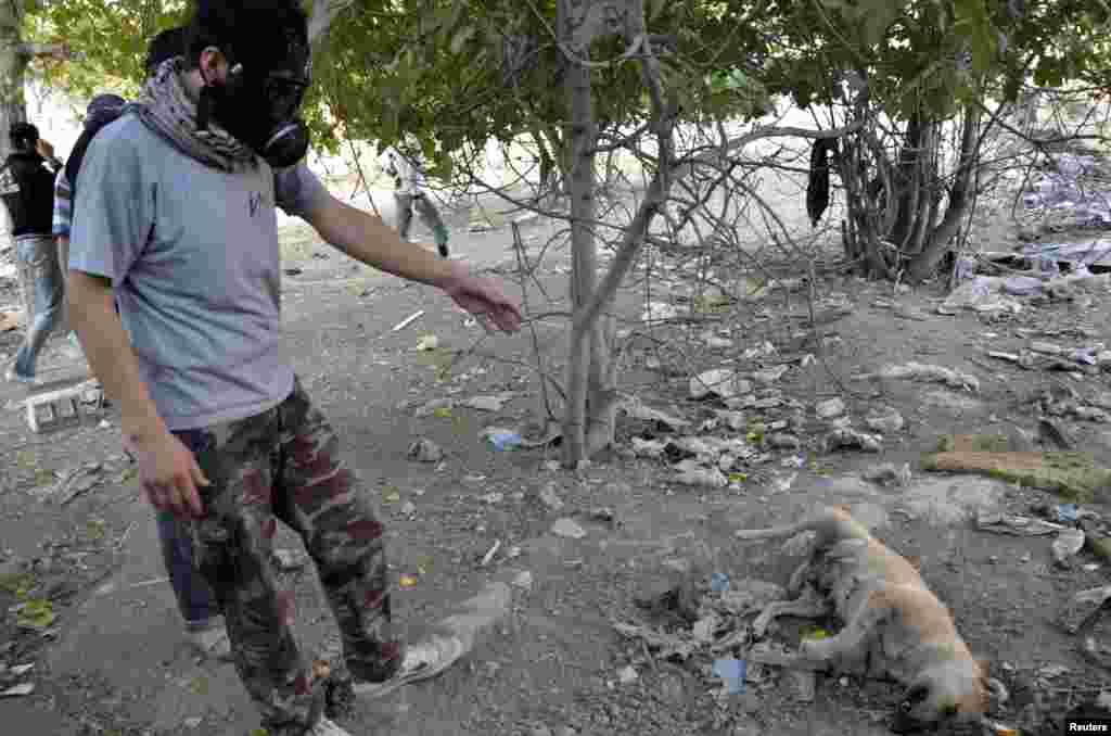 An activist wearing a gas mask stands next to a dead dog as he looks for bodies to collect samples to check for chemical weapon use, in Zamalka, Damascus, August 22, 2013.
