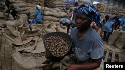 Une Femme employée dans un entrepôt de noix de cajou à Abidjan, Côte d'Ivoire, le 12 juillet 2018. REUTERS / Luc Gnago - RC1DF84D42B0