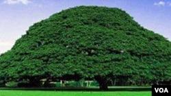 Ardaa jilaa Oromiyaa hedduutti galma abbootii gadaa jaaruutti jiran