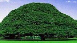 Oromiyaa fulaa hedduutti qubee qajeelchanii barreessuuf hujiitti jiran, ardaa jilaa hedduulleetti galma AbbootiI gADAA jaaruutti jiran