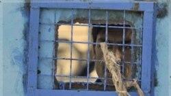 ناتو: انتقال بازداشت شدگان به برخی از زندان های افغانستان متوقف می شود