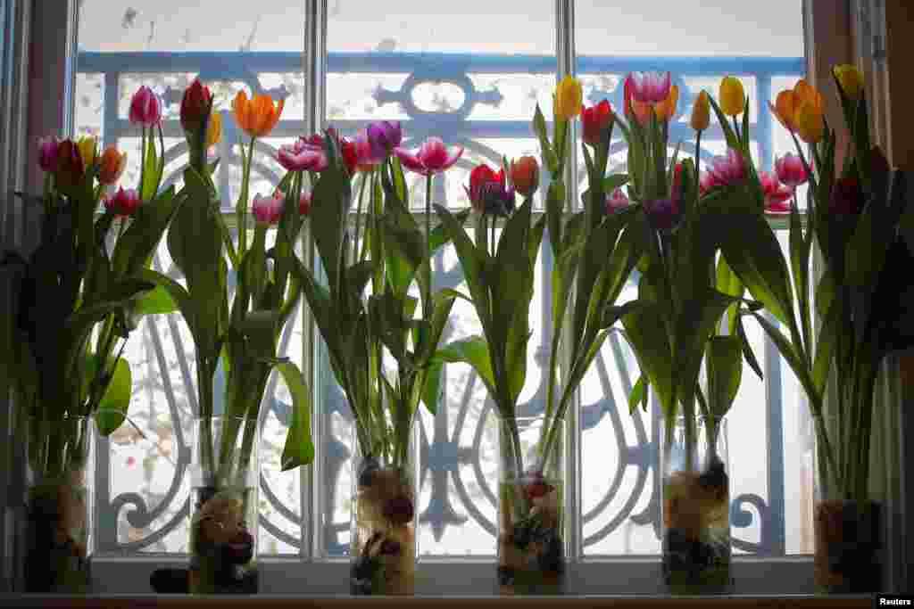 ផ្កាត្រូវបានគេដាក់នៅនិវេសដ្ឋានរបស់ឯកអគ្គរដ្ឋទូតហូឡង់ ក្នុងពេលប្រារព្ធទិវាផ្កា Tulip ដែលជាព្រឹត្តិការណ៍មួយរៀបចំដើម្បីអបអរដល់វិស័យថែរក្សាផ្ការបស់ប្រទេសហូឡង់ និងទំនាក់ទំនងនេះជាមួយសហរដ្ឋអាមេរិក នៅរដ្ឋធានីវ៉ាស៊ីនតោន។