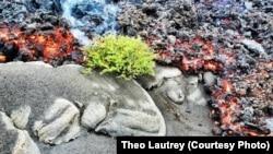 Chã das Caldeiras Ilha do Fogo Cabo Verde