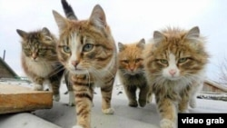 A photo of cats illustrates the #BrusselsLockdown Twitter hashtag.