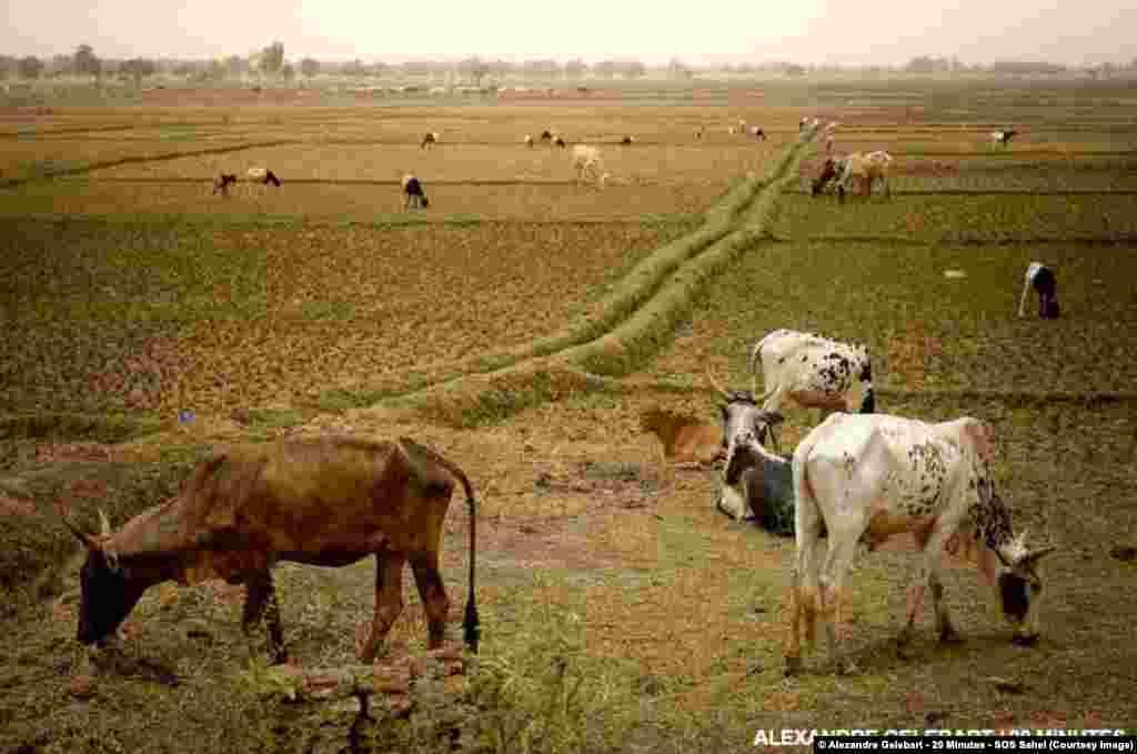 Combattre la désertification permet d'assurer une meilleure sécurité alimentaire.