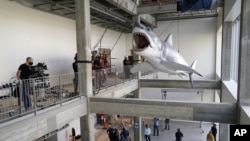 "A fiberglass replica of Bruce, the shark from Steven Spielberg's classic 1975 film ""Jaws,"" is lifted into a suspended position for display at the new Academy of Museum of Motion Pictures, Friday, Nov. 20, 2020, in Los Angeles. (AP Photo/Chris Pizzello)"
