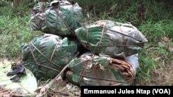 Les écorces d'un arbre aux vertus thérapeutiques destinées au commerce, à Iboti (littoral), le 19 octobre 2020. (VOA/Emmanuel Jules Ntap)