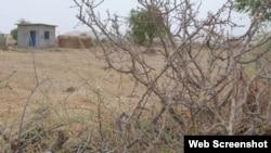 تھر میں خشک سالی کا ایک منظر