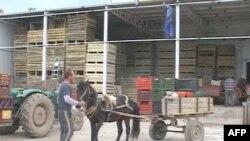 Në Korçë prodhimi i mollëve nxit fermerët të eksportojnë drejt vendeve të Ballkanit