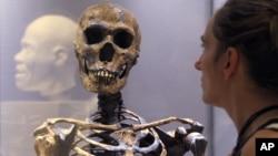 Los primeros antepasados humanos no provienen de especies como el Homo habilis, el Homo rudolfensis o el Homo erectus.