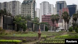 En el pasado el gobierno promovió los cultivos en tierras urbanas para generar fuentes de ingreso.