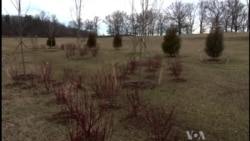 Trees Planted in Memory of US Civil War Soldiers