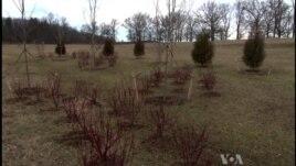Mbillen pemë në kujtim të ushtarëve të luftës civile
