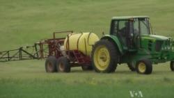Public Hearings on Popular Pesticide Spotlight Safety Concerns
