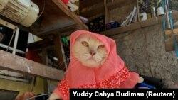 Seekor kucing mengenakan kostum cosplay hijab di Bogor, Jawa Barat, 26 November 2020. (Foto: Reuters/Yuddy Cahya Budiman)