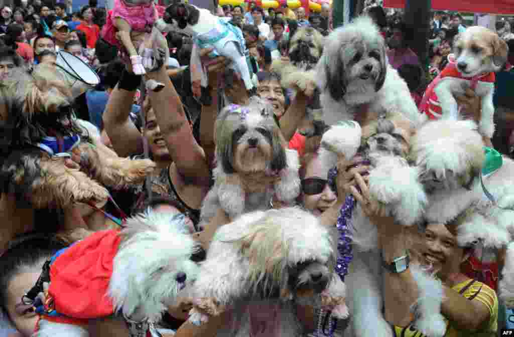 Owners raise their pets for a blessing from the Roman Catholic church to celebrate World Animal Day in Manila, Philippines.
