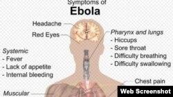 Ebola virusu