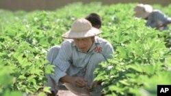 在越南的吸毒者接收再教育(資料圖片)