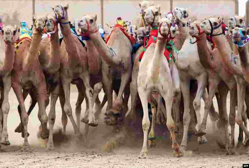 مشرق وسطیٰ اور افریقہ کے کئی ممالک میں اونٹ دوڑ پسندیدہ مشغلہ ہے