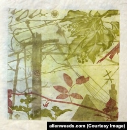 A Patterson Clark print on White Mulberry paper made with pigments from Multiflora Rose, Irish Ivy, Amur Honeysuckle, Leatherleaf Mahonia and weed soot.