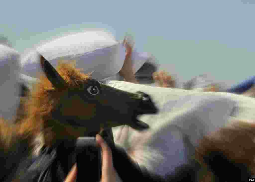 Смешались в кучу кони, люди