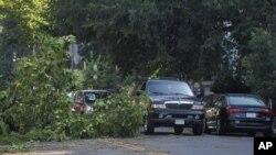 風暴過後樹木連根拔起。