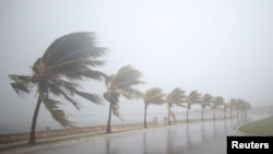 Palm trees sway in the wind as Hurricane Irma bears down on Caibarien, Cuba, Sept. 8, 2017. Irma was weakened a bit by Cuba's terrain but it remains a very powerful Category 4 storm with maximum sustained winds of 215 kilometers per hour.