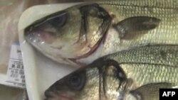 Problemi evropskih ribara