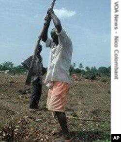 Un paysan africain à l'oeuvre