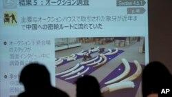 世界自然基金會日本分會在東京外國新聞中心舉行新聞發布會,屏幕上出現了象牙的圖片。 (2017年12月20日)