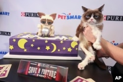 Grumpy Cat celebrated her sixth birthday in New York City, April 2018. (Purina)