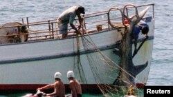 호주, 주민 보호 차원 상어 사냥 허용