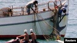 Nelayan menangkap hiu hammerhead di pantai Bondi, Australia (foto: ilustrasi).