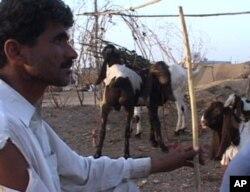 قربانی کے جانور اورسیلاب زدگان کی بحالی