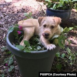 Dogs can get into all sorts of trouble with pot... or pots.