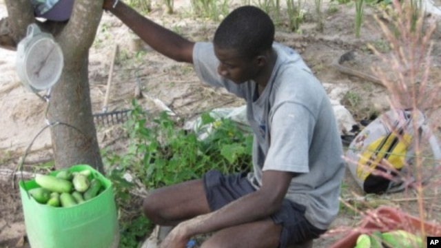 Farmers in the Senegalese village of Keur Madaro are producing more crops with the innovative Super Vegetable Garden program