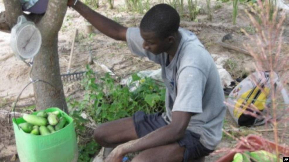 essay contest on achieving african food security launchedfarmers in the senegalese village of keur madaro are producing more crops   the innovative super