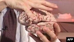 Как исследования мозга изменят жизнь в 21 веке?